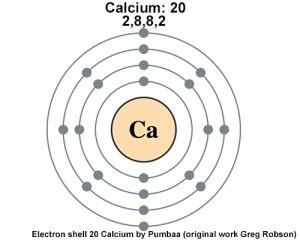 Calcium Shell