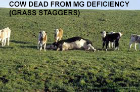 Grass Staggers Victim
