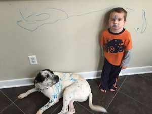 drawing on dog
