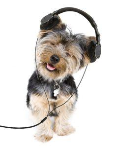 yorkie earphones
