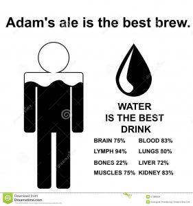 adam's ale