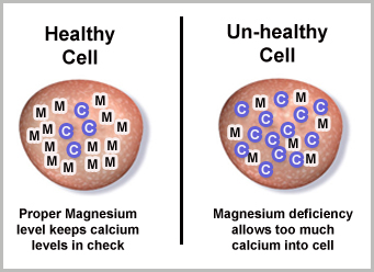 Mg Ca in cells