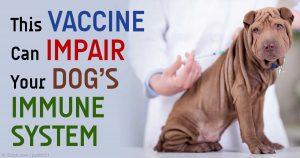 vaccine damage dogs