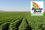 Harvesting with Roundup